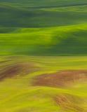 Цветы Palouse Стоковая Фотография