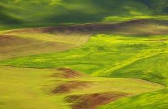 Цветы Palouse Стоковое Изображение RF