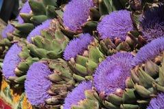 Цветя артишок стоковые фотографии rf