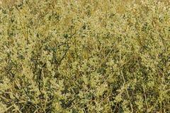 Цветя верба загоренная заходящим солнцем стоковые фото