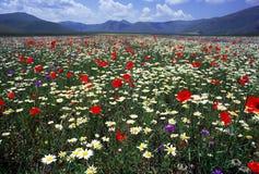 цветя весна Стоковые Фотографии RF