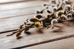 Цветя ветви вербы Стоковые Изображения RF