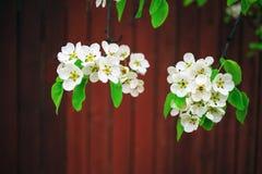 Цветя ветви дерева Стоковые Изображения