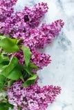 Цветя ветви сирени Стоковая Фотография RF