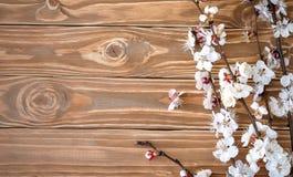 Цветя ветвь абрикоса на деревянной предпосылке стоковое фото rf