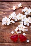 Цветя ветвь с белыми чувствительными цветками на деревянной поверхности Стоковое Изображение