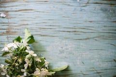 Цветя ветвь яблони на деревянной предпосылке стоковые фото