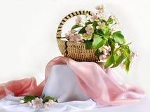 Цветя ветвь яблока в корзине Стоковые Фото