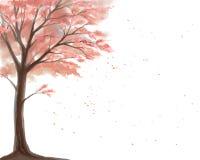 Цветя вишневое дерево на белой предпосылке Стоковое Изображение RF
