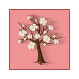 Цветя вишневое дерево с его собственной тенью Стоковая Фотография RF