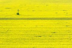 Цветя время поля рапса весной Стоковое Изображение RF