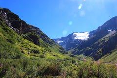 Цветя высокогорный ландшафт луга Стоковое фото RF