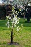 цветя детеныши вала сада Стоковые Фотографии RF