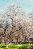 Цветя дерево в большом городе Стоковые Фото