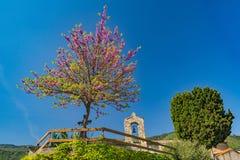 Цветя дерево и колокольня Стоковая Фотография