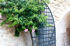 Цветя дерево на предпосылке старого камня Стоковая Фотография