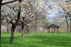 Цветя дерево Стоковые Изображения RF