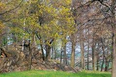 Цветя дерево Стоковое фото RF