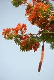 Цветя дерево Стоковая Фотография RF