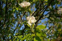 Цветя дерево Стоковые Фотографии RF