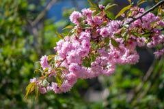 Цветя деревья весной Стоковые Фотографии RF