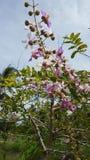 Цветя деревья красивый букет фиолетового и белого в Стоковые Фотографии RF