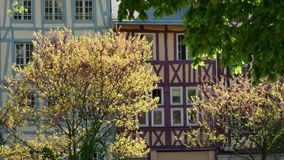 Цветя деревья около зданий в городе акции видеоматериалы