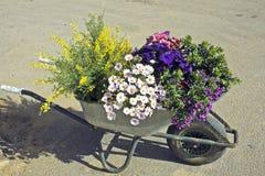 цветя заводы сада подготавливают весеннее время Стоковые Изображения