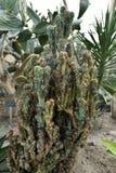 Цветя заводы angiosperms стоковые фотографии rf