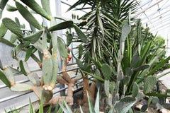 Цветя заводы angiosperms стоковая фотография rf
