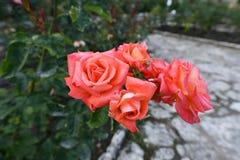 Цветя заводы angiosperms стоковая фотография