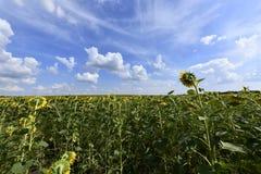 Цветя заводы angiosperms стоковые изображения