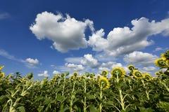Цветя заводы angiosperms стоковое фото rf