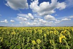Цветя заводы angiosperms стоковые фото