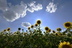 Цветя заводы angiosperms стоковое изображение
