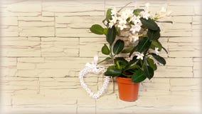 Цветя комнатное растение против стены Стоковое Изображение