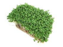 цветя кресс-салат Стоковая Фотография