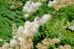 Цветя кустарник и насекомое Стоковое Изображение