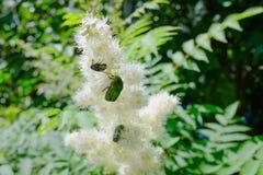 Цветя кустарник и насекомые Стоковое Изображение