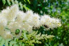 Цветя кустарник и насекомые Стоковое Фото