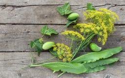 Цветя листья укропа, хрена и смородины, огурцы Стоковая Фотография