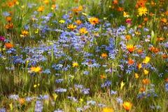 цветя лужок Стоковые Изображения