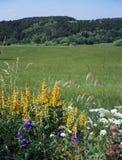 цветя лужок Стоковая Фотография