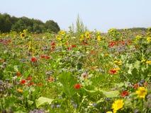Цветя лужок Стоковая Фотография RF