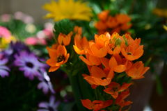 Цветя миндалина Стоковое Фото