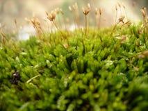 цветя мох Стоковые Изображения RF