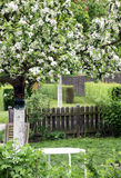Цветя орнаментальная яблоня в орнаментальном саде Стоковое Изображение RF