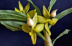 Цветя орхидея стоковые фото