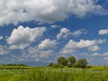цветя пинк лотоса озера Стоковое Изображение