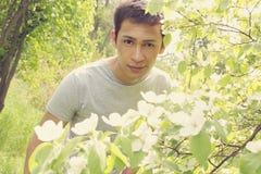 Цветя подкрашиванный bush айвы, стоковые фото
